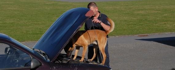 Training mit einem Rauschgiftspürhund